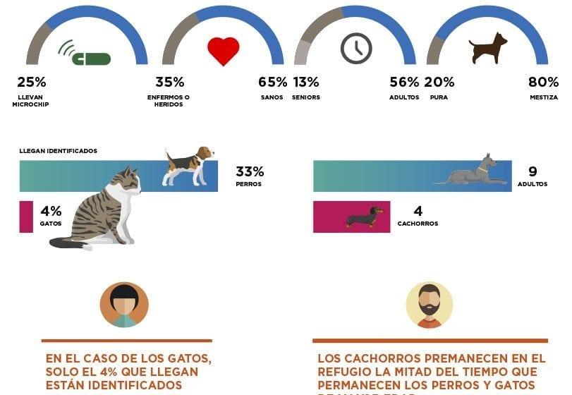 Animales abandonados: claves sobre cómo actuar para evitarles una muerte prematura