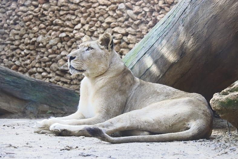 S.O.S. en el zoo de Castellar: cómo alimentar a 1.200 animales sin ingresos