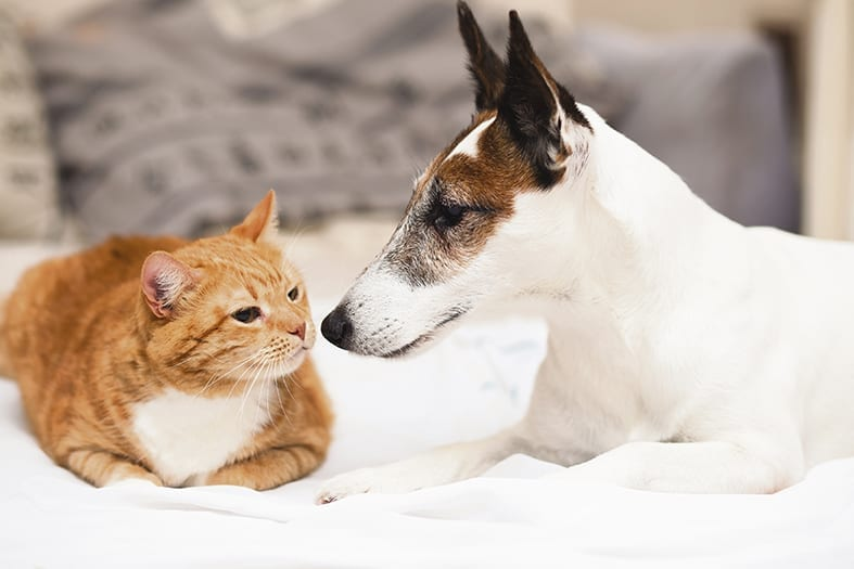 Ley de Bienestar animal: La educación, el registro y la esterilización como base de la nueva normativa