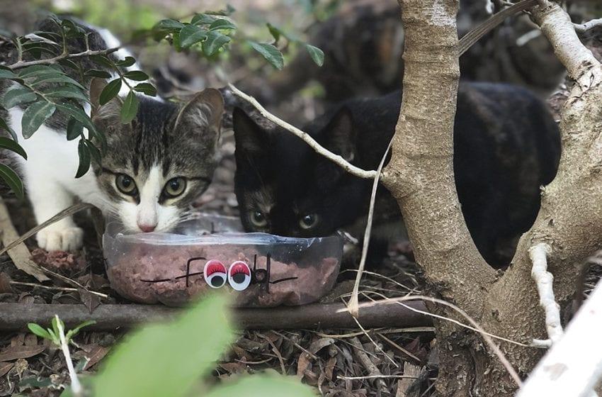 SoCCS, RCGS y Trocadero unidos en el control de las colonias felinas